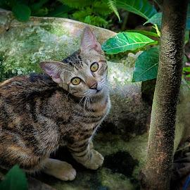 Pusakal by Raynand Catalan - Animals - Cats Playing