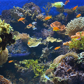 Beautiful color's by Jennifer Parmelee - Animals Fish ( water, nature, fish, places, tanks,  )
