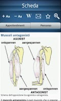 Screenshot of Encyclopedia of anatomy