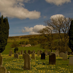 Daffodils  by Ron Jnr - Landscapes Prairies, Meadows & Fields ( clouds, north yorkshire, blue sky, farndale, old grave stones, grass, trees, daffodils, grave stones, church yard, fields )