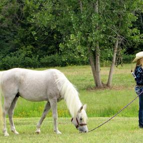 Break time! by Alan Hammond - Animals Horses ( horses,  )
