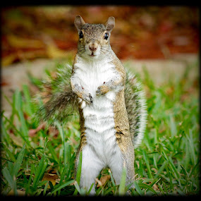 Please.....please... by Debra Martins - Animals Other Mammals ( nature, wildlife, squirrel, animal )
