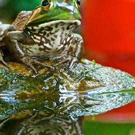 Walter 22 by Michael Crawley - Animals Amphibians