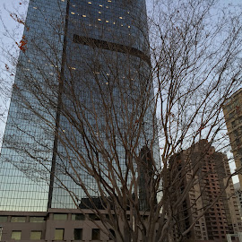 Building and Tree by Eric Miramontes - Novices Only Objects & Still Life ( building, tree, landscape, city )