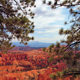 Bryce Canyon by Becky McGuire - Landscapes Caves & Formations ( red, tvlgoddess, park, utah, becky mcguire, national, bryce, canyon, rock, scenery, view, landscape,  )