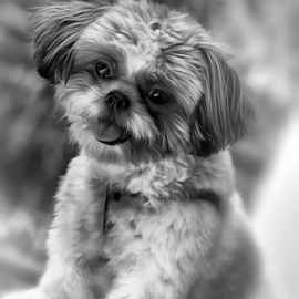 Smile  by Ferdinand Ludo - Animals - Dogs Portraits ( pose, cheese, portrait, smile please )