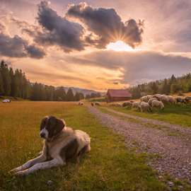 Watchdog resting by Stanislav Horacek - Landscapes Prairies, Meadows & Fields