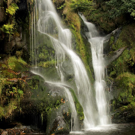 Posforth fall by Ineta Nachtmann - Nature Up Close Water ( yorkshire, waterfall, woodland, landscape, river )