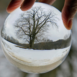 Snow Globe by Lorri Nussbaum - Artistic Objects Glass ( winter, tree, crystal ball, snow, sphere, crystal )