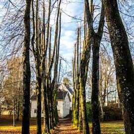 After Another by Blerim Havolli - Nature Up Close Trees & Bushes ( porsgrunn, november, havolli, blerim, trees, leaves, norway )