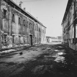 Black cat by Krunoslav Nevistic - City,  Street & Park  Street Scenes ( water, cat, window, black and white, animal )