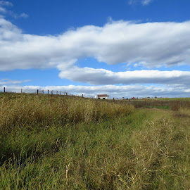 by Cindy Cooper Houser - Landscapes Prairies, Meadows & Fields