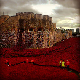 Blood Swept Lands and Seas of Red by Paul Jenking - Novices Only Landscapes ( remembrance, london, poppy, toweroflondon )
