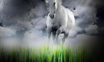 Screenshot of White Horse Wallpapers