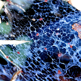 by Cheyanne Howlett - Nature Up Close Webs ( strange, colorful, web, leaves, pretty, holes )