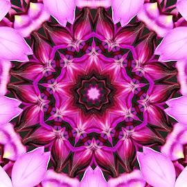 sweet colours by Ophe Blacks - Digital Art Things ( pink, things, digital photography, digital, purple flower )