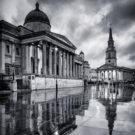 Wet Day in Trafalgar Square by George Johnson - Buildings & Architecture Public & Historical ( landmark, famous, reflection, tourist, dawn, london, wet, rain,  )