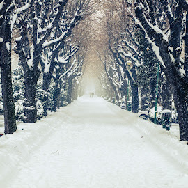 Powder Trees by Bogdan Ionita - City,  Street & Park  City Parks ( winter, park, bench, snow, snowflakes, powder, trees )