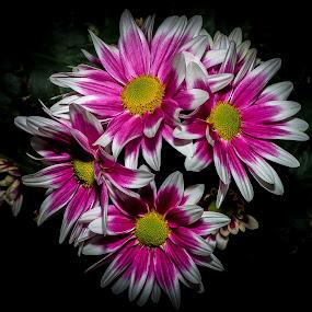 by John Wyne James - Flowers Flower Arangements