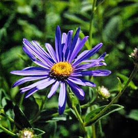 Blue Flower by Francis de la Peña - Nature Up Close Gardens & Produce