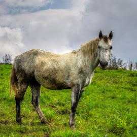 Large eyes view by Siniša Biljan - Animals Horses (  )