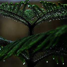 Rain Drops  by Rupam Sarma - Nature Up Close Trees & Bushes