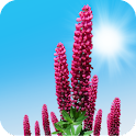 Wild Lupins Live Wallpaper icon
