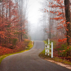 Foggy Morning on the Trail by Carol Plummer - City,  Street & Park  City Parks