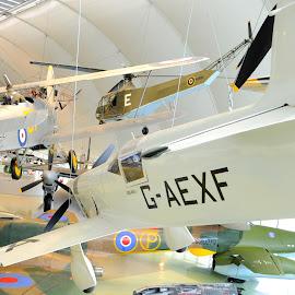 Mew Gull suspended by DJ Cockburn - Transportation Airplanes ( hendon, london, pioneer, milestones of flight, aeroplane, airplane, percival mew gull, alex henshaw, royal air force, museum, raf, g-aexf )