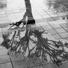 Reflection by Austin Lawler - Instagram & Mobile Android ( water, reflection, tree, black and white, puddle, rain, sidewalk )