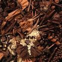 ChocolateLiveWallpaper icon