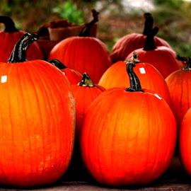 Pumpkins Everywhere by Roxanne Dean - Food & Drink Fruits & Vegetables ( orange, fruit, market, fruite stand )