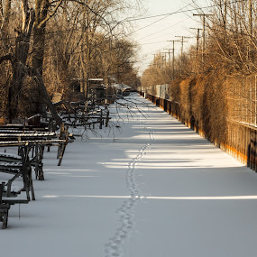 going home by Jarrod Kudzia - Landscapes Weather ( footprints, winter, ice, snow, canal, dock )