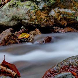 by Mario Pavlić - Nature Up Close Water