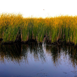 Midwest Marsh by Tyrell Heaton - Instagram & Mobile iPhone ( field, marsh, flooded, iphone )