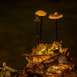 Fungis at the top by Peter Samuelsson - Nature Up Close Mushrooms & Fungi
