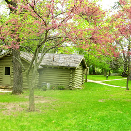 Cabin in the Woods in Spring by Kathy Rose Willis - Buildings & Architecture Other Exteriors ( cabin, wooden, green, sees, pink, woods,  )