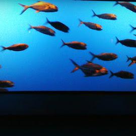 Fish in School ! by Linda Blevins - Animals Fish ( water, fish, aquarium, beauty,  )