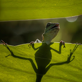 peek by Alonk's Roby - Animals Reptiles