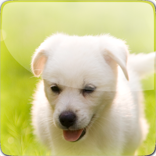 Pet Emergency Assist 醫療 App LOGO-APP開箱王