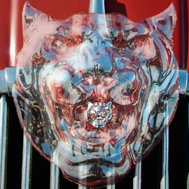 Jaguar by Victor Eliu - Artistic Objects Other Objects ( jaguar, ornament, artistic, transportation, object, hood,  )