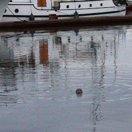 Seal Watching by Glenda Koehler - Novices Only Wildlife