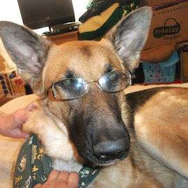 Professor Mikie by Linda Sandoval - Animals - Dogs Puppies ( evelyn scavo )