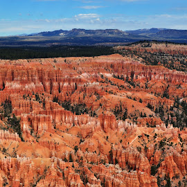Early morning at Bryce Point by Terry Niec - Landscapes Caves & Formations ( bryce canyon national park, erosion, formations, canyon, hoodoos, bryce point, red cliffs,  )