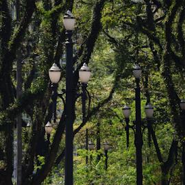 Praça da Sé - São Paulo SP by Marcello Toldi - City,  Street & Park  City Parks