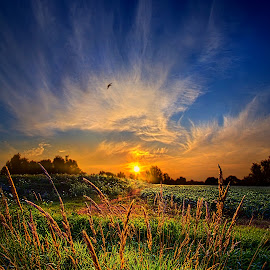 For When The Day Began by Phil Koch - Landscapes Prairies, Meadows & Fields ( vertical, photograph, yellow, leaves, photooftheday, love, sky, tree, nature, autumn, bestoftheday, flower, instagood, follow, orange, twilight, agriculture, horizon, portrait, environment, dawn, serene, trees, floral, wisconsin, natural light, landscape, phil koch, spring, photography, sun, farm, horizons, clouds, office, park, green, scenic, morning, shadows, wild flowers, field, picoftheday, red, blue, sunset, peace, fall, meadow, landscapephotography, summer, earth, sunrise, landscapes )