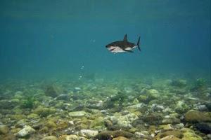 Screenshot of Shark Bite Aquarium