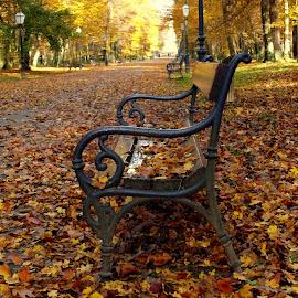 by Mariana Bešker - City,  Street & Park  City Parks