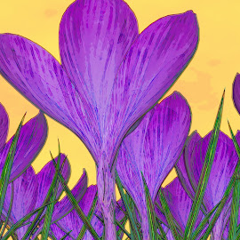Crocus Watercolor by Jerry Androy - Painting All Painting