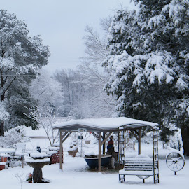 Winter 2011 in East Texas by Teresia Foreman - Landscapes Weather (  )